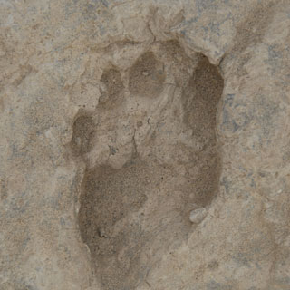 15-million-footprints-uncover_1