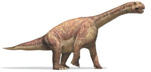 Camarasaurus-or-chambered-004