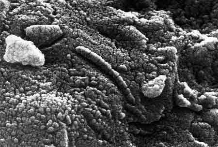 Nuove ipotesi sul meteorite alh 84001